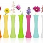 Nos Vases