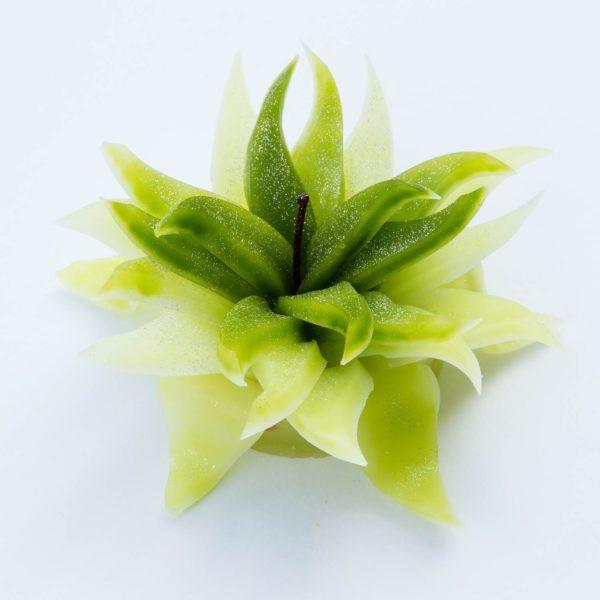 Bougie de Fleur au Parfum Naturelle – Senteur Pomme